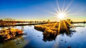 在莱费尔鸟类保护区的沼泽地的日落在Lasner附近的,BC,加拿大 库存照片