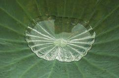 在莲花叶子的水 免版税图库摄影