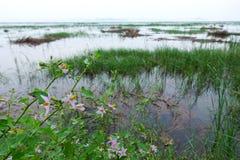 在莲花湖附近的植物群在Khao山姆Roi Yot Natio的日落时间的 免版税库存照片