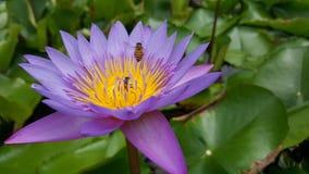 在莲花的蜂 免版税库存照片