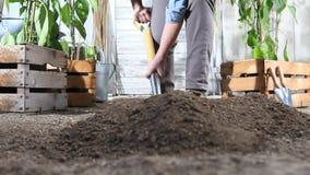 在菜园开掘的春天土壤的妇女工作与铁锹,在木箱充分的甜椒植物附近 股票录像