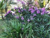 在菠萝后被紧贴的紫色Boggie 库存图片