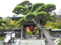 在菩萨镰仓入口的杉树  免版税库存图片