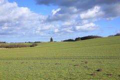 在菲英岛海岛,丹麦上的田园诗风景 免版税图库摄影