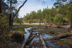 在萨彦岭的Arshan在Buriatya,西伯利亚-俄罗斯 库存图片