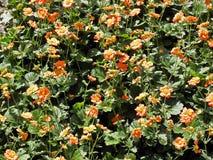在萨格勒布` s植物园,植物群, 4反弹 库存照片