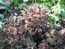 在萨格勒布` s植物园,植物群, 5反弹 库存照片