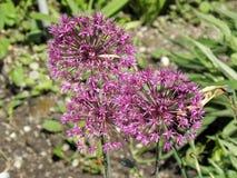 在萨格勒布` s植物园,植物群, 10反弹 免版税库存照片