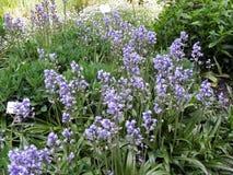 在萨格勒布` s植物园,植物群, 11反弹 免版税库存图片