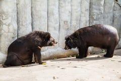 在萨穆特Prakan鳄鱼农场和动物园, Thail的亚洲黑熊 库存图片