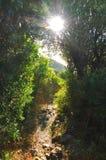 在萨莫斯岛的风景 免版税库存照片