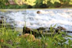 在落基山桧河的河岸的高草 免版税图库摄影
