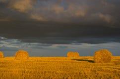 在落日的最后光芒的黄色金黄秸杆 免版税库存图片