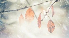 在落的雪下的退色的叶子 股票视频