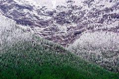 在落矶山林木线的新鲜的下落的雪  库存照片