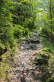 在著名供徒步旅行的小道Eifelsteig的道路 免版税库存照片