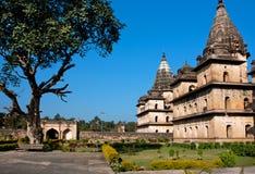 在著名历史站点附近的传播的树中央邦国家的印度 免版税库存图片