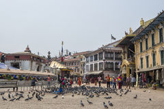 在著名吸引力佛教寺庙Boudhanath Stupa,加德满都,尼泊尔附近的鸽子 免版税库存照片