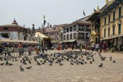 在著名吸引力佛教寺庙Boudhanath Stupa,加德满都,尼泊尔附近的鸽子 库存图片