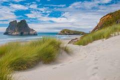 在著名Wharariki海滩,南岛,新的玉蜀黍属的沙丘植被 免版税库存照片