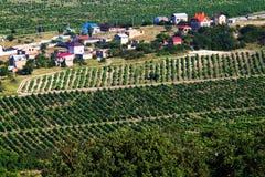 在葡萄园中的村庄 免版税库存图片