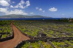 在葡萄园中的红色足迹。亚速尔群岛 免版税库存照片