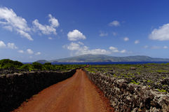 在葡萄园中的红色足迹。亚速尔群岛 库存照片