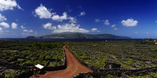 在葡萄园之中的红色线索。 亚速尔群岛 免版税库存图片