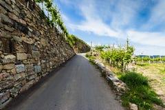 在葡萄园之间的农村路瓦豪谷的 奥地利 库存照片