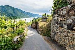 在葡萄园之间的农村路瓦豪谷的 奥地利 免版税库存图片