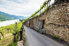 在葡萄园之间的农村路瓦豪谷的 奥地利 库存图片