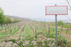 在葡萄园前面的概念性空白的标志 图库摄影