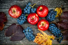 在葡萄园和农场的秋天收获用成熟葡萄和红色苹果,新鲜和有机果子 免版税库存照片