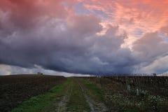 在葡萄园的剧烈的天空在奥德省,在法国的南部的Occitanie 库存图片