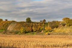 在葡萄园的晚上在捷克 多云 葡萄酒增长 国家(地区)山谷酒 免版税库存图片