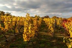 在葡萄园的晚上在捷克 多云 葡萄酒增长 国家(地区)山谷酒 免版税库存照片