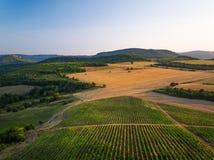 在葡萄园的美好的日落在欧洲,鸟瞰图调遣 图库摄影