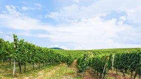 在葡萄园的蓝天在阿尔萨斯酒路线地区 免版税图库摄影