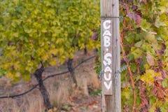 在葡萄园里竖立路标绘与指示卡波内-索维尼葡萄树在秋天的小室Sauv 库存图片