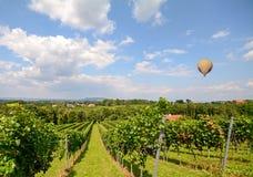 在葡萄园里迅速增加飞行在红葡萄酒葡萄在收获,施蒂里亚奥地利前 免版税库存照片