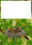 在葡萄树的巢 库存照片
