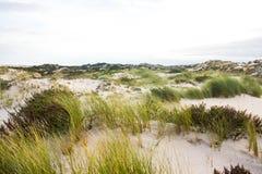 在葡萄牙大西洋海岸的沙丘领域 免版税库存照片