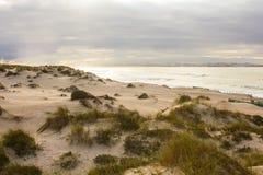 在葡萄牙大西洋海岸的被保存的沙丘领域 免版税库存图片