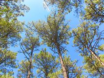 在葡萄牙的北部的森林的天空 免版税库存图片