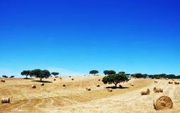 在葡萄牙的南部的秸杆卷 免版税库存图片