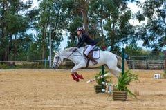 在葡萄牙自然马储备的马术 免版税库存照片