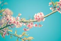在葡萄酒口气样式的樱花背景的 库存图片