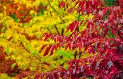 在葡萄酒影片射击的五颜六色的秋天树 免版税库存图片