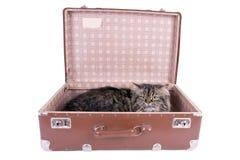 在葡萄酒手提箱的波斯猫 图库摄影