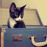 在葡萄酒手提箱的逗人喜爱的小猫 图库摄影